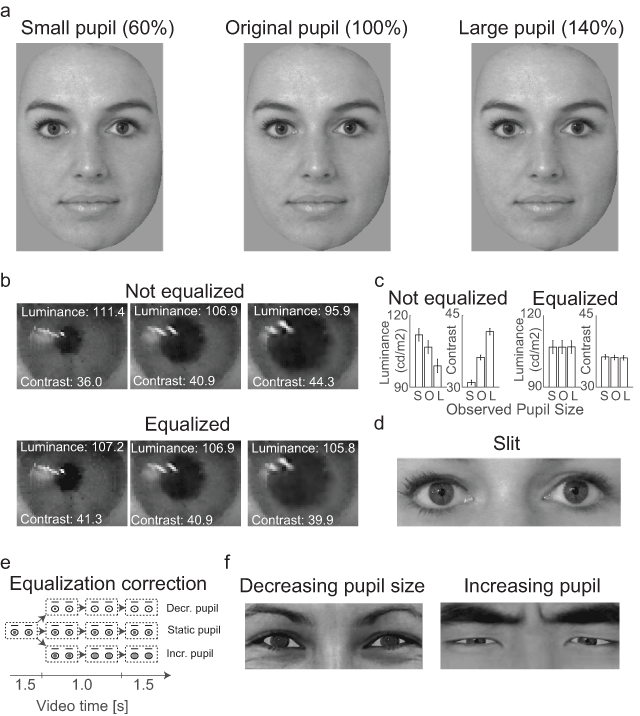 Pupil Mimicry is the Result of Brightness Perception of the Iris and